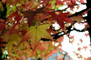 Aux couleur de L'automne