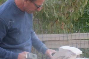 Commande d'un dauphin pour le Pays Basque