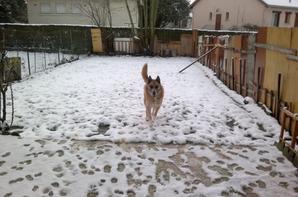 Rocky et Gribouille dans la neige