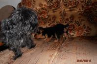Chipie et Gribouille