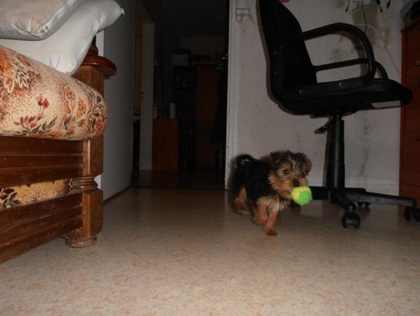 Chipie joue