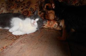 Chipie et Sarah