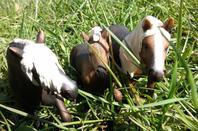 Le Haras du Cheval Sauvage en Balade