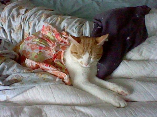 Oliver aime se déguiser