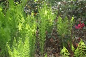 Ambiance Végétale (Terra Botanica - Angers)