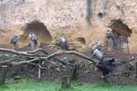 Zoo de Doué-la-Fontaine (Maine-et-Loire)