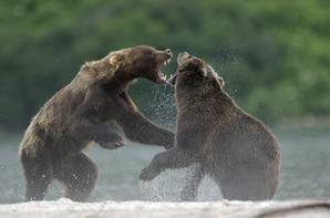 Vincent Munier : Wildlife Photographer