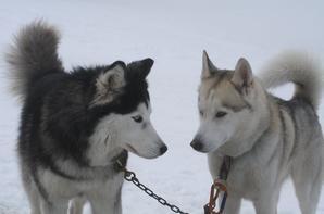 ❀ Les chiens du club, dans tous leurs états !! ❀