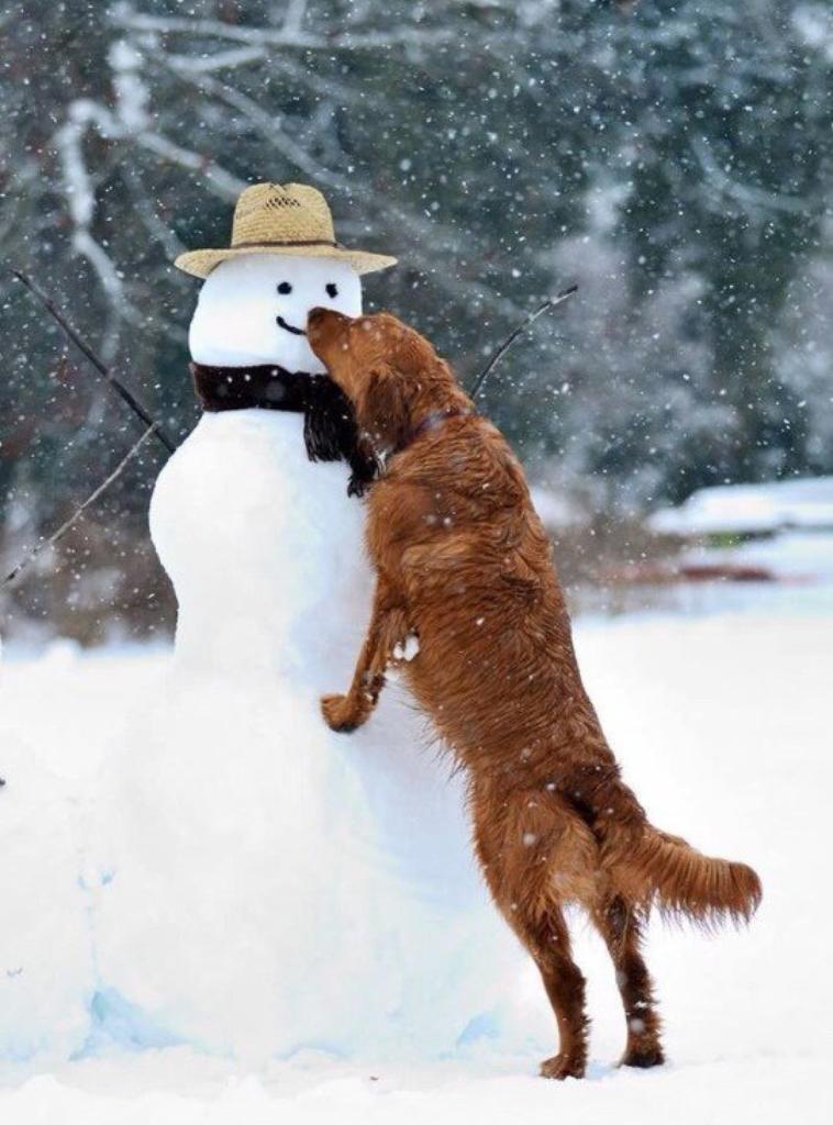 il n'y a pas que les enfants qui kiffent la neige