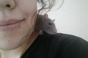 Mes Rats <3