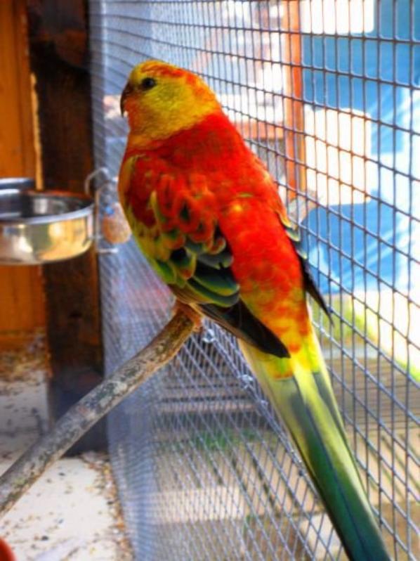 super et jolie oiseaux j'adore