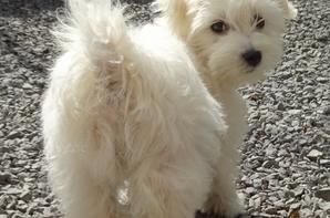 notre petite Chanel :)