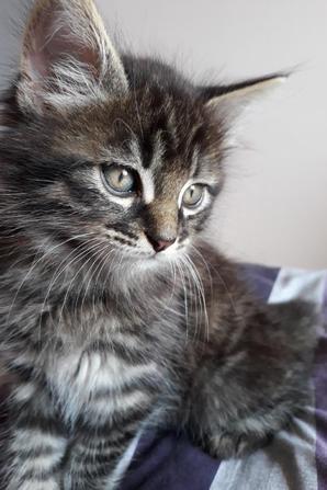 Mon chaton d'amour ♥
