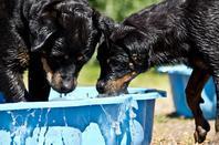 Jeux d'eau (21 juin)