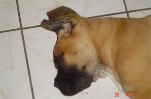 Goliath à 2 mois !!!! que le temps passe vite....