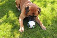 Durée de vie d'un ballon avec Goliath 10 minutes !!!