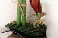 Amaryllis en beauté