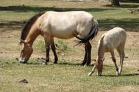 10 juillet 2010 Safari Han sur Lesse