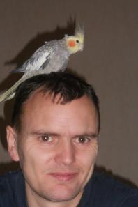 Calopsitte 25 décembre 2012