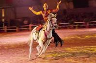 06 émé édition de salon cheval - EL JADIDA