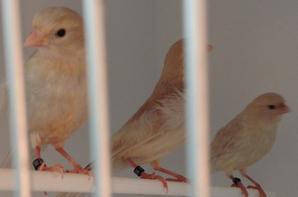 Some 2013 chicks weaned