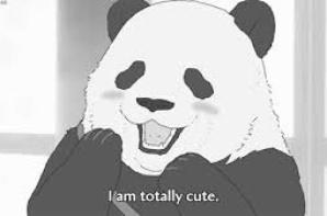 Petits pandas