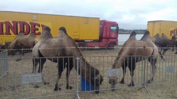 """Partie 2:""""les animaux sont les rois au cirque der Jean Richard"""".!."""