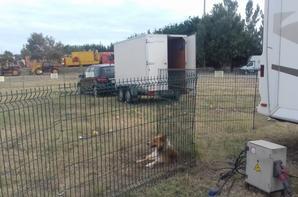 """Partie 2::""""les animaux sont rois au cirque Pinder Jean Richard!."""""""