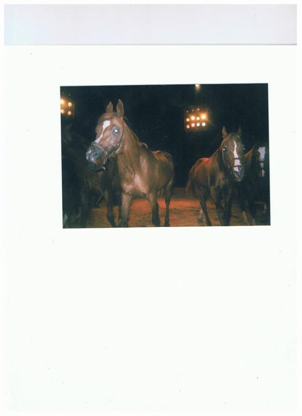 """""""la cavalerie chez Pinder""""!.(Episode 1 sur 3)."""