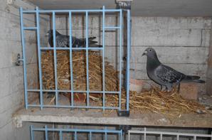 Un nid HAUT  de gamme