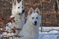 Eran et Havey s'éclatent dans la forêt enneigée