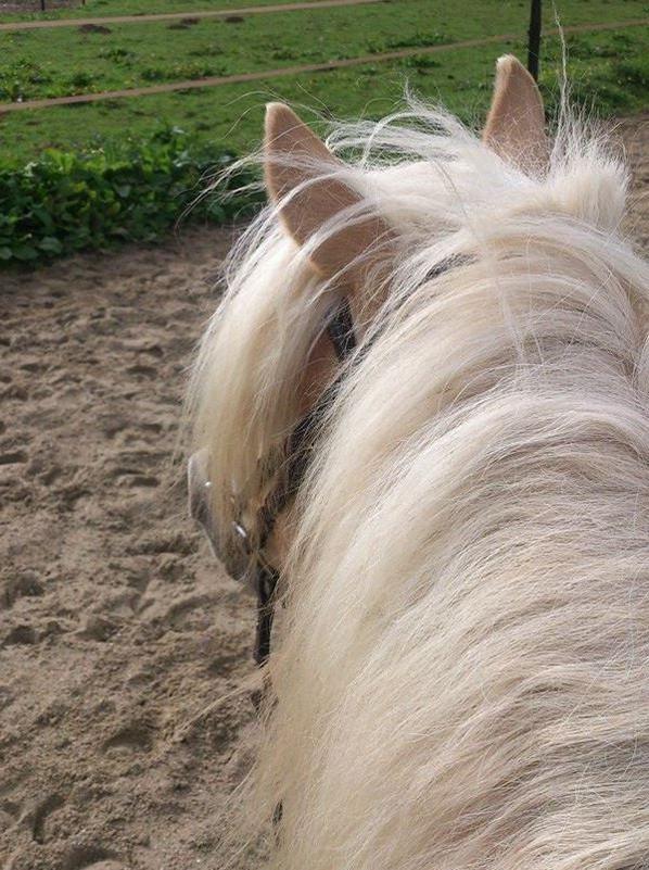 Remise à cheval après 7mois