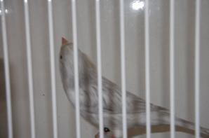 de beaux oiseaux a redggio