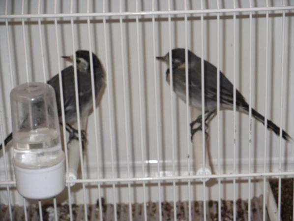 des oiseaux que l on ne voir pas partout
