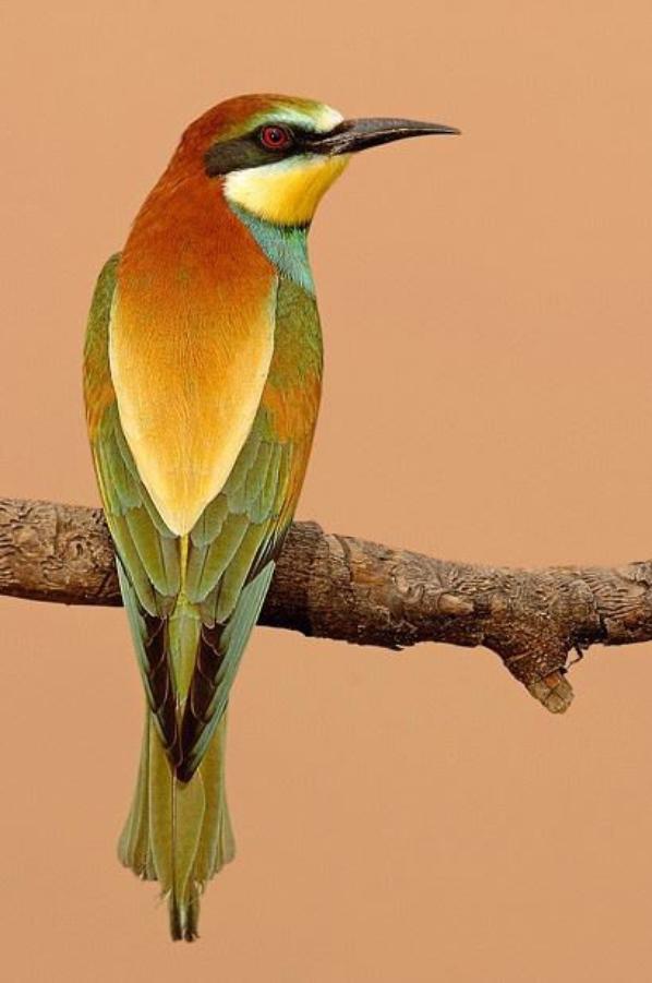 on les aime ces oiseaux