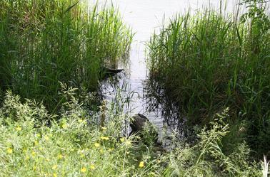 Barrage de la Vanelle