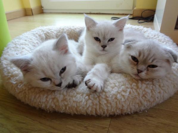 Un gratin de chats !