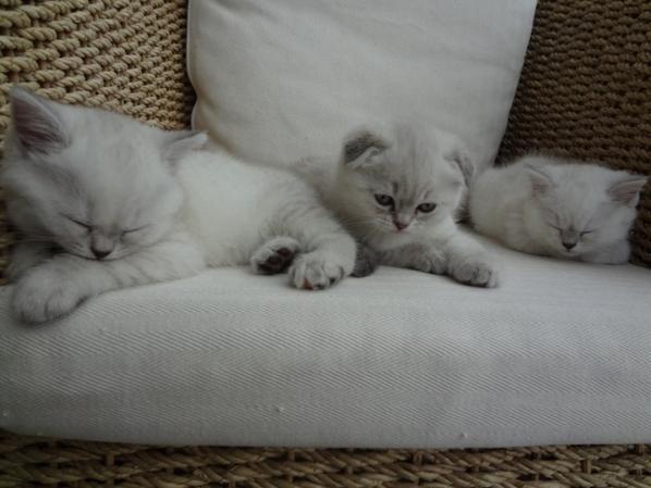 Sleeping time (parce que la journée a été rude)