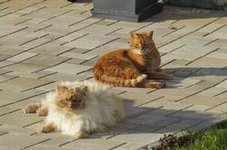 Chats et bain de soleil vu par Béa pour lorraineblog