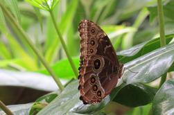 Jardin des papillons vu par Béa pour lorrarineblog