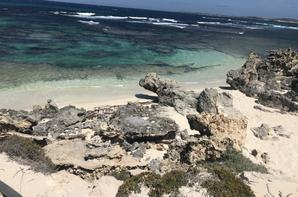 île des quokkas
