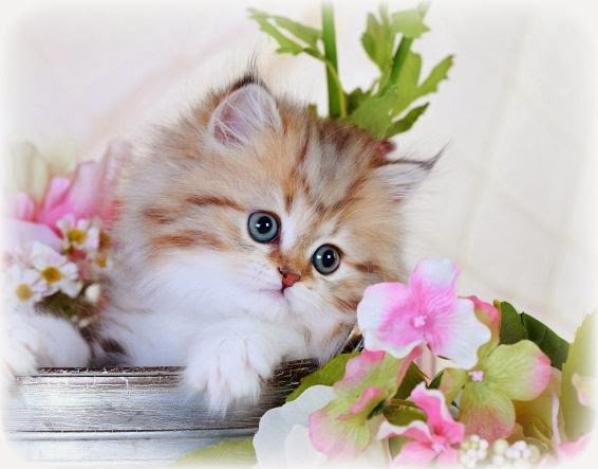 so cute<33