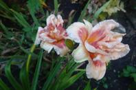 bonne soirée, mes fleurs