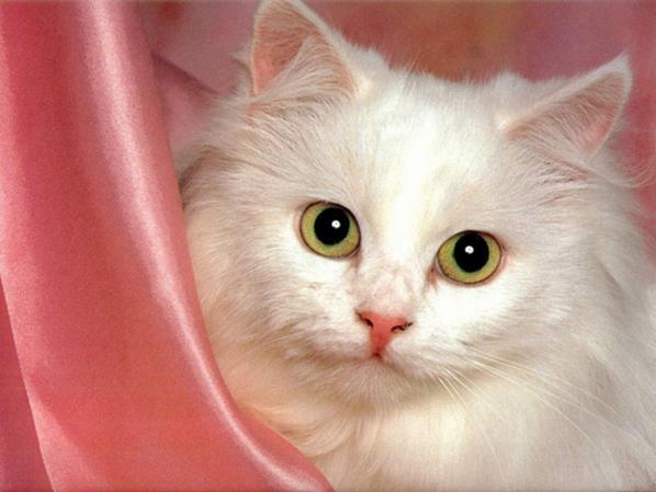 un jolie petit chaton