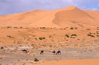 sweetie life in desert