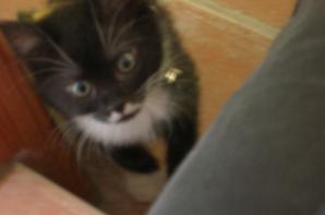 un toutou et un petit chat