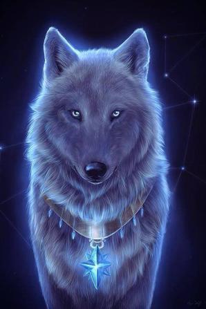 belle images de loup