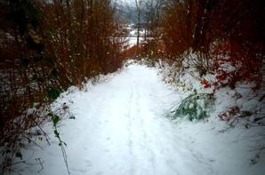 Bel hiver !