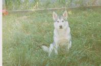 tout mes chien qui nous on quitter tro vite je vous oublie pas