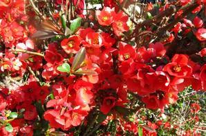 gallerie fleur 1